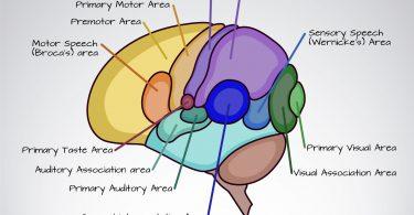 Direto ao Ponto: Exame Neurológico. Um roteiro básico e simplificado!