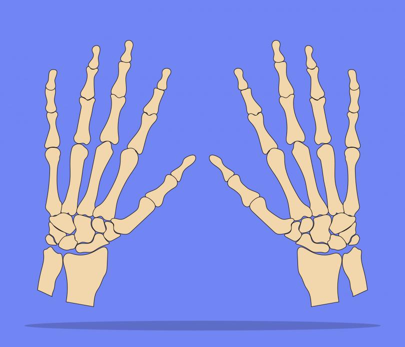 Você sabe quais são os ossos que formam as mãos? | Blog Jaleko